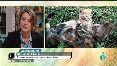 A punto con La 2 - Animales en casa - Los gatos callejeros