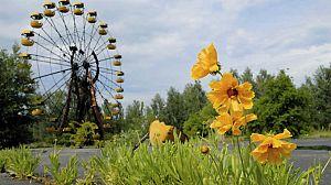 Chernóbil, ¿una historia natural? Un enigma radioactivo