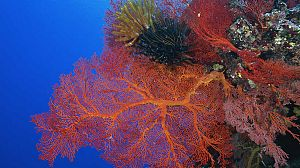 La vida en el arrecife (3)