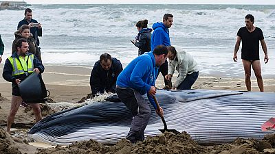 Aparece una cría de ballena varada en una playa de Huelva