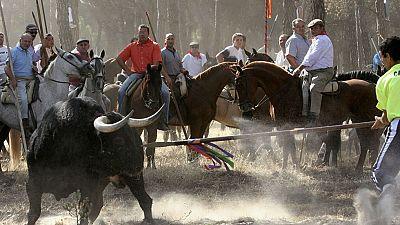 La Junta de Castilla y León prohíbe que se mate al Toro de la Vega