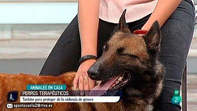 A punto con La 2 - Animales en casa - Perros terapéuticos de defensa