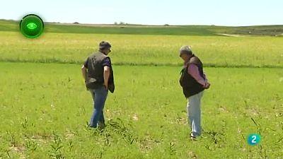 Agrosfera - En primer plano - LIFE recuperacion de suelos