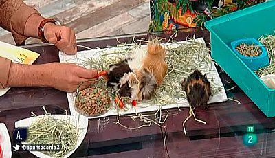 A punto con La 2 - Animales en casa - Exóticos y abandonados