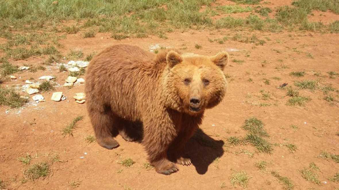 ¿Se ha escapado un oso de Cabárceno?