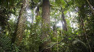 Patrimonio de la Humanidad: Parque Nacional de Manu (Perú)