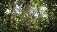 Grandes documentales - Patrimonio de la Humanidad: Parque Nacional de Manu (Perú) - ver ahora