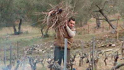 Red natura 2000 - Un viñedo y una bodega en la sierra norte de Sevilla