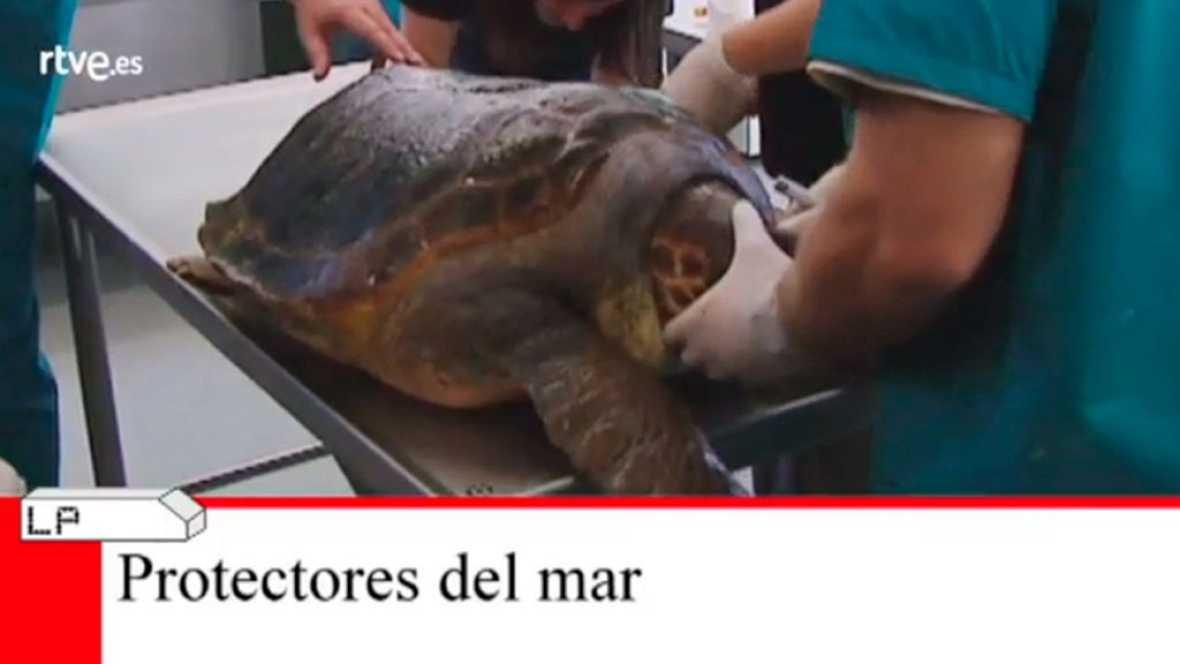 Lab24 - Recuperación de fauna marina y Empresa digital - avance