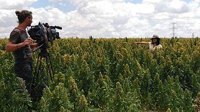 Quinoa, la semilla de moda