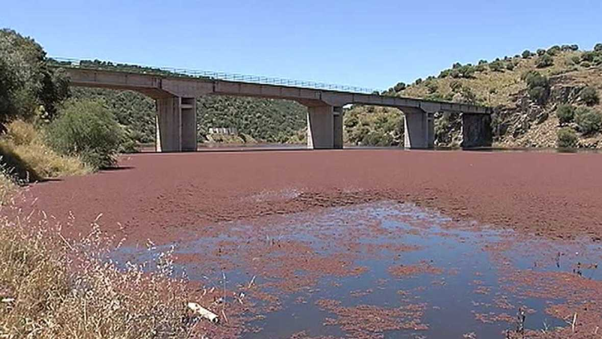 Remite la plaga del helecho de agua que cubre un tramo del río Almonte (Cáceres)