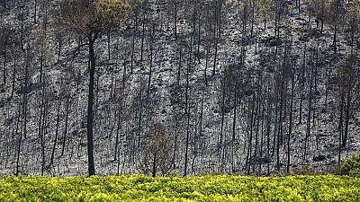 Estabilizado el incendio de Carcaixent, aunque aún no está controlado