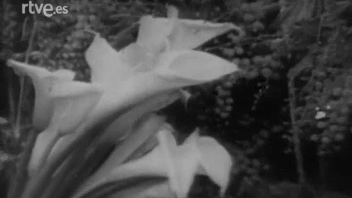 Más allá - Las plantas piensan