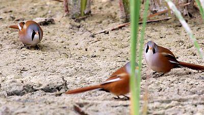 Red Natura 2000 - Humedales de la Mancha