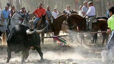 El Ayuntamiento de Tordesillas anuncia que este año no celebrará el polémico torneo del Toro de la Vega