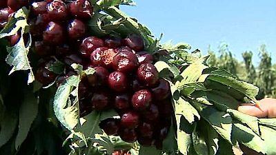 Agrosfera - 09/07/16 - ver ahora