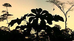 Sepahua: la madera de la casa común