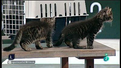A punto con La2 - Animales en casa - Transportar gatos