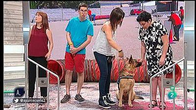 A punto con La 2 - Animales en casa - Circuitos para perros y sus guías