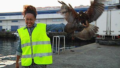 �Qu� hace un halc�n en el puerto de Vigo?