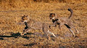 Vida salvaje. El Serengueti, la gran aventura africana
