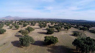 Red Natura 2000 - Montes de Toledo