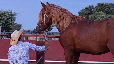 El encantador de caballos
