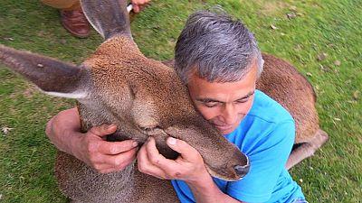 Bambi, un amigo fiel