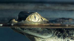 Alamto, el paraíso de los reptiles