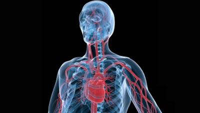 Saber Vivir - Las arterias coronarias
