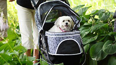 Cómo viajar con mascotas para garantizar un trayecto seguro