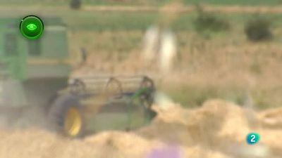 Agrosfera - En Primer Plano - Cosecha de Cereal