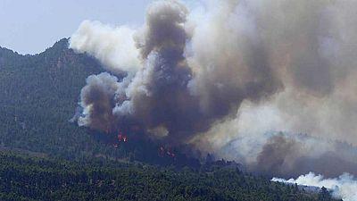 Un agente forestal muerto, 700 desalojados y mil hectáreas quemadas por las llamas en La Palma