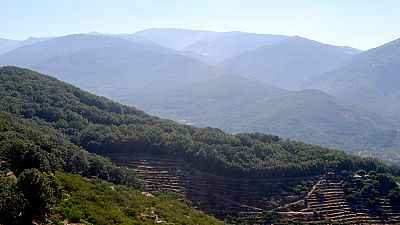 El incendio del valle del Jerte, estabilizado tras arrasar unas 900 hectáreas
