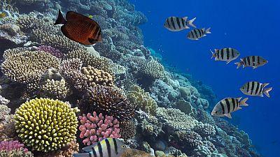 Obama establece en Hawai la reserva marina m�s grande del mundo