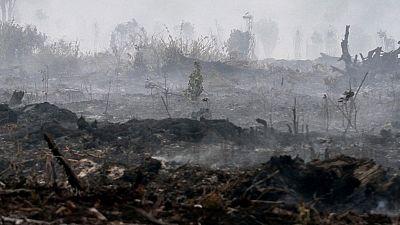 El fuego deja un paisaje desolador
