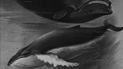 El planeta azul - La agon�a del mar (V)
