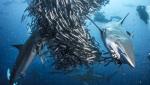 Grandes documentales - Así arranca el primer capítulo de 'Tiburón'