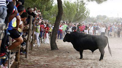 El pueblo de Tordesillas (Valladolid) celebra este martes sus primeras fiestas sin su Toro de la Vega