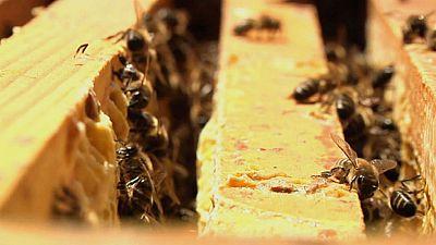 La medicina de las abejas