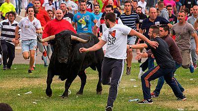 Tensión en el primer festejo taurino de Tordesillas en el que se prohíbe el sacrificio del animal