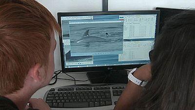 """Los biólogos marinos han podido estudiar  un claro ejemplo de """"infanticidio"""" entre defines"""