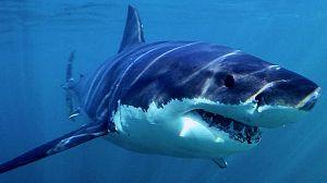 Tiburón (1)