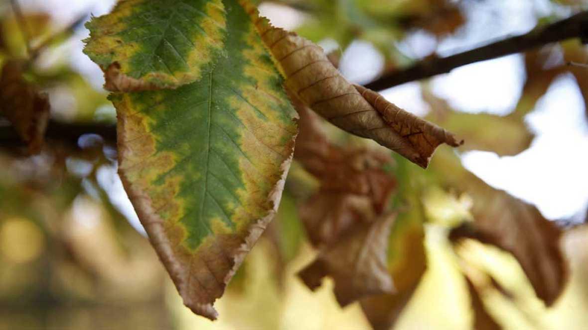 Se espera un otoño con temperaturas por encima de la media