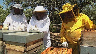 Juan Plantas y la miel