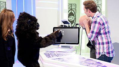 Órbita Laika - El experimentador de a bordo - La inteligencia de los chimpancés