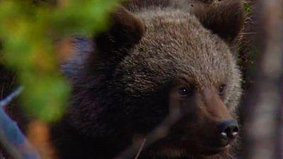 Grandes documentales - El salvaje Norte: El bosque - ver ahora