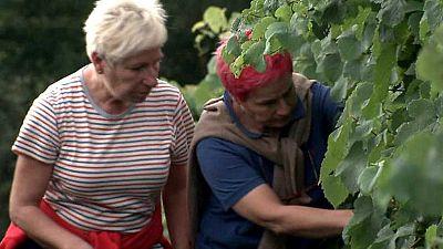 Agrosfera - 08/10/16 - ver ahora