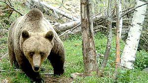 Mi vecino es un oso