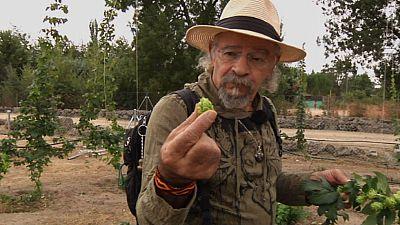Juan Plantas y el l�pulo